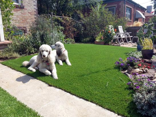 Artificial Grass Photos: How To Install Artificial Grass Cleone, California Landscape Photos, Front Yard Ideas