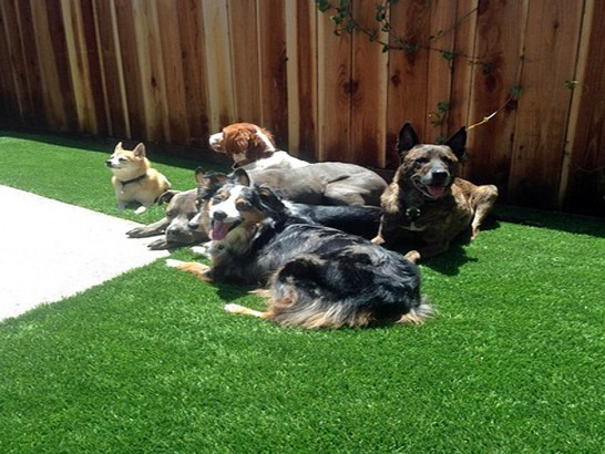 Artificial Grass Photos: Synthetic Grass Cost Newell, California Roof Top, Backyard Makeover