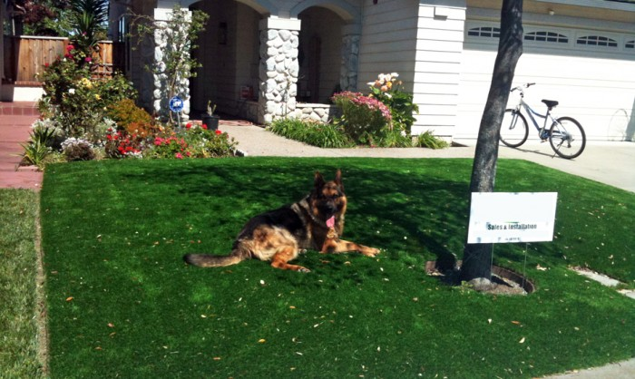 Pet Grass, Artificial Grass For Dogs in Redding